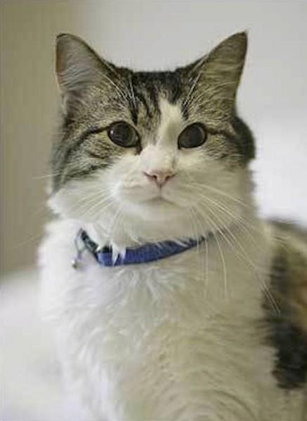 Oscar the cat at Steere House Nursing Home