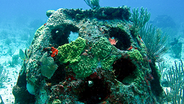 Eternal Reefs burial at sea reef