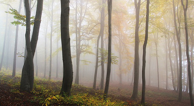 forest funerals germany